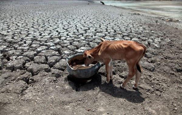 В Намибии сильнейшая за 30 лет засуха