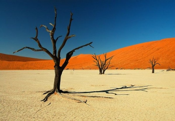 В Намибии сильнейшая за 30 лет засуха2