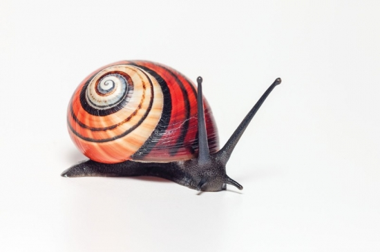 see-the-diverse-beauty-of-colourful-land-snails-around-the-world-4