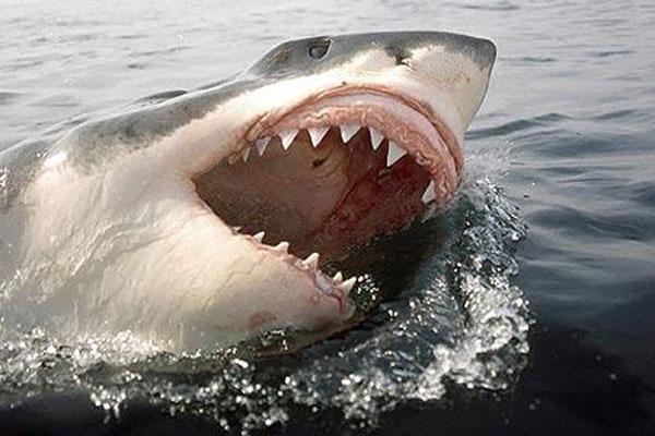 нападение акул на людей