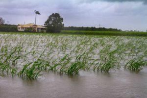 проливной дождь австралия