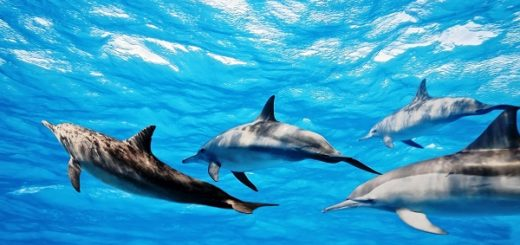 Дельфины, которые погибли у берегов Испании, страдали от редкой болезни мозга