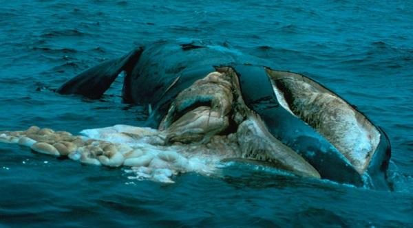 Вымирание китов