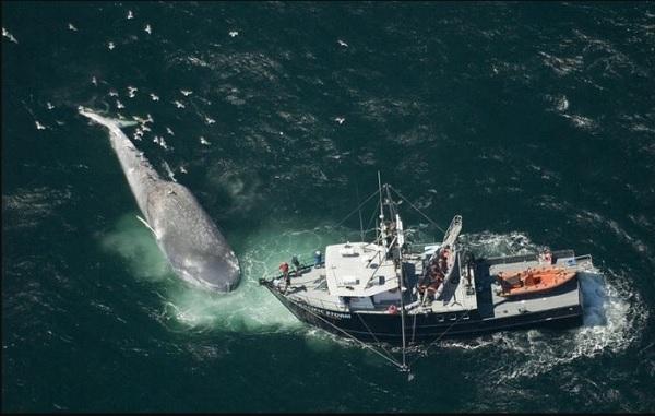 Проблема вымирание китов