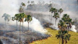 Бразильский национальный парк горит: огонь уничтожил четверть охраняемой территории
