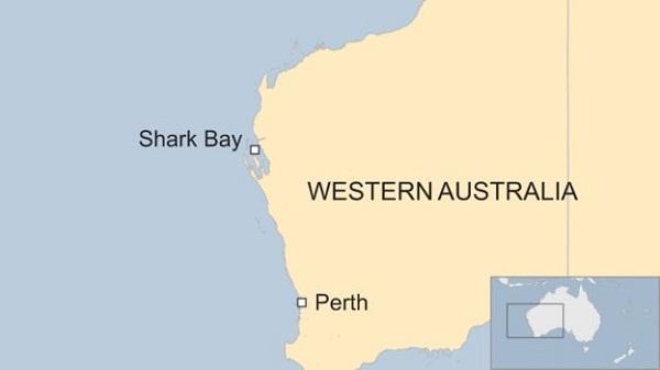 Британский дайвер сумел спастись после 7-часового преследования тигровой акулой