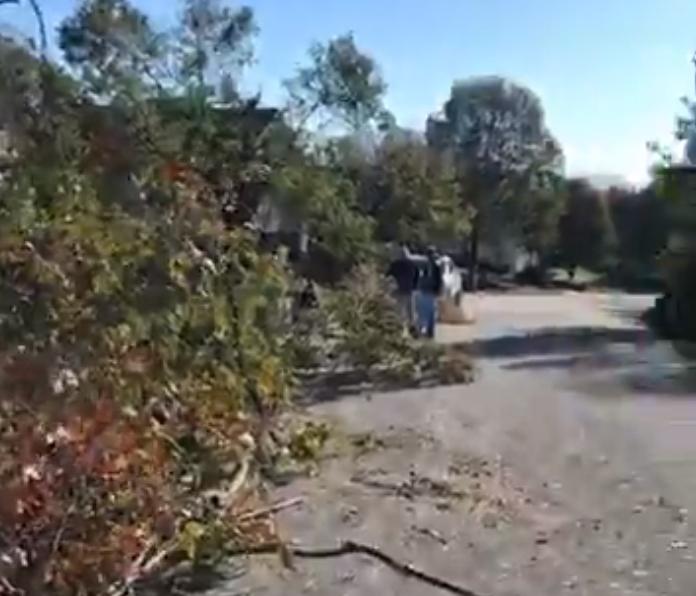 Дороги завалены деревьями после урагана