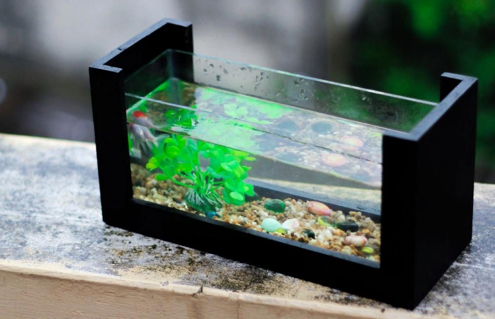 Как выбрать аквариум, чтобы потом не пришлось его менять?